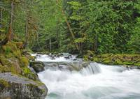Newhalem Creek Rapids, North Cascades National Par
