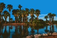 Papago Park Palms by Kirt Tisdale