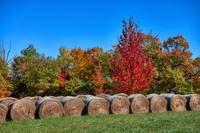 Hay Bales in Autumn