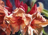 Crimson and Bronze Rhododendron