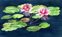 Two Waterlilies with Pads