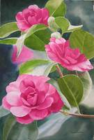 bright rose-colored camellias photo 1