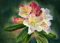 yellow rhododendron with n copy