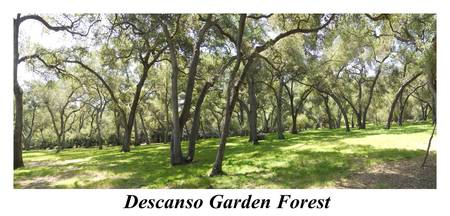 Descanso Garden Forest