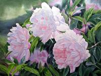 Bridgewater Peonies Pink and White