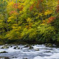 Autumn Stream Art Prints & Posters by Larry Bohlin