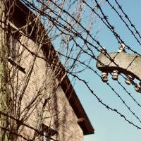 Wire Fence of Auschwitz Art Prints & Posters by Matthew Green