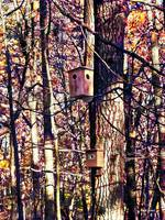 Two Birdhouses in the Autumn Woods