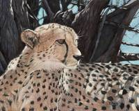Original oil painting Cheetah
