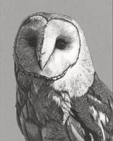 Original ink drawing Barn owl portrait