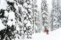 Skiers in Forest