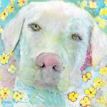 Maisie White Labrador Retriever Flower Dog by RD Riccoboni