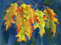 Autumn Oak Leaves on Blue Background