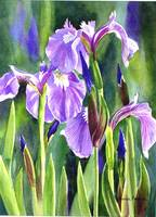 Three Wild Irises