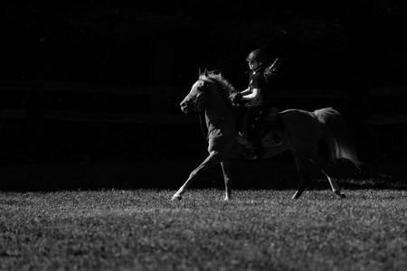Equestrian in Black & White-2