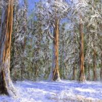Christmas sequoias Art Prints & Posters by Matthew Hannum