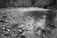 The bay of the Merced River (Yosemite) B/W