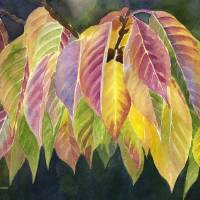 """Magenta and Green Autumn Leaves"" by Pacific-NW-Watercolors"