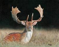 Original oil painting Fallow dear dama