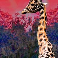 """Dawn of the Giraffe"" by mjacedesigns"