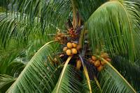 Clustered Coconuts