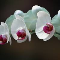 """WhiteRedOrchids"" by GiorgettaMcRee"