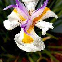 Florida Orchid Art Prints & Posters by Kris Courtney