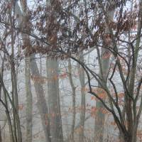 A Foggy Morn  by Karen Adams
