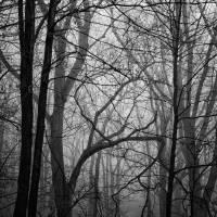 Misty Morning and Wet Rocks by Karen Adams