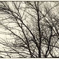 Winter Whispers by Karen Adams