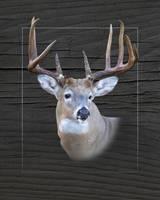 Buck Whitetail Deer Portrait by Daniel Teetor