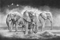 "stunning ""elephant"" artwork for sale on fine art prints"