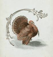 Vintage Thanksgiving Turkey Illustration (1899)
