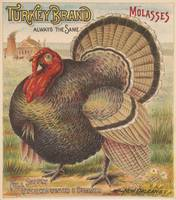 Vintage Thanksgiving Turkey Illustration (1891)