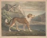 Vintage Illustration of a Newfoundland Dog (1835)