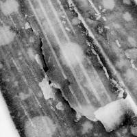 Winter Tracks II by Karen Adams