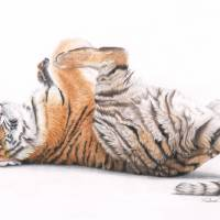 Tiger Feet Art Prints & Posters by Peter Williams