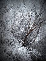 Beautiful Snow Covered Tree in Winter
