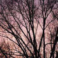 January Night by Through The Split Window