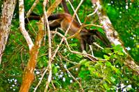Monkey in the Canopy