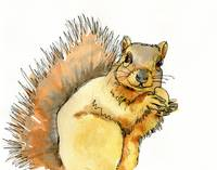 Squirrel Art | Watercolor Painting