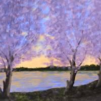 DC cherries at dawn Art Prints & Posters by Matthew Hannum