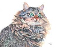 Original gouache painting cat