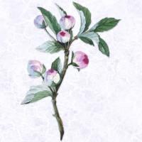 Lavender Peony Buds on Subtle Lavender Marble Art Prints & Posters by Elaine Plesser