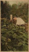 [Man in garden] ca. 1940 Gelatin silver print with