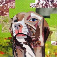 The Distracted Pit Bull Art Prints & Posters by Megan Coyle
