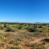 Mojave Desert Boron Rest Area by Richard Thomas