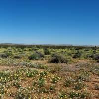 Mojave Panorama by Richard Thomas