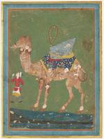 Composite Camel with Attendant third quarter 16th