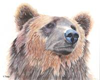 Original gouache painting grizzly bear